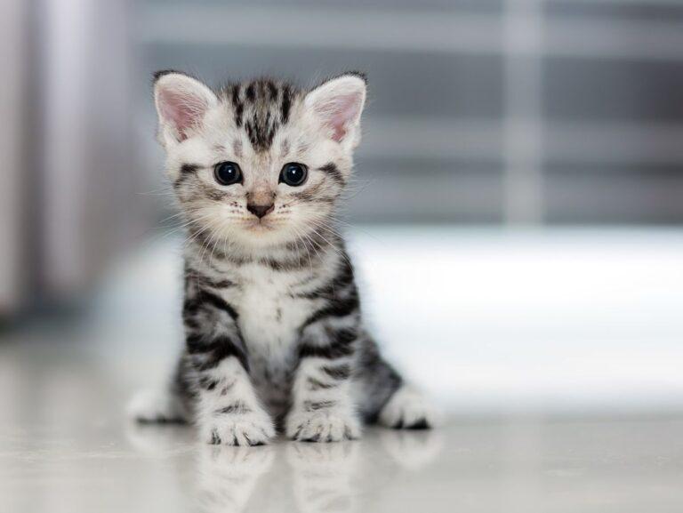 Tips Memberi Makanan Untuk Anak Kucing - Disini Saja