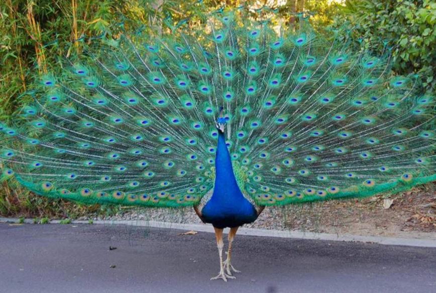 pelestarian-burung-indonesia